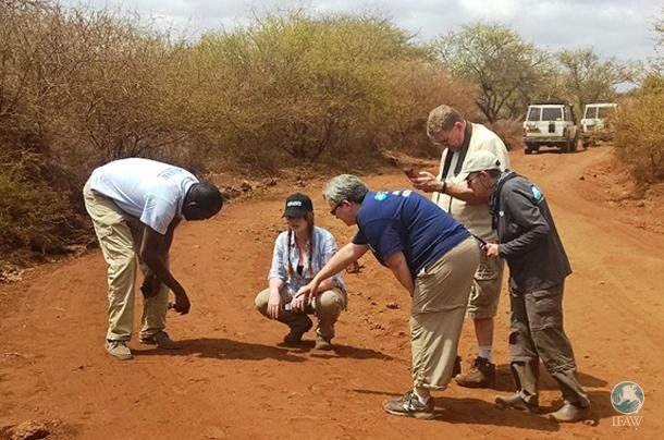 exploring animal tracks in kenya