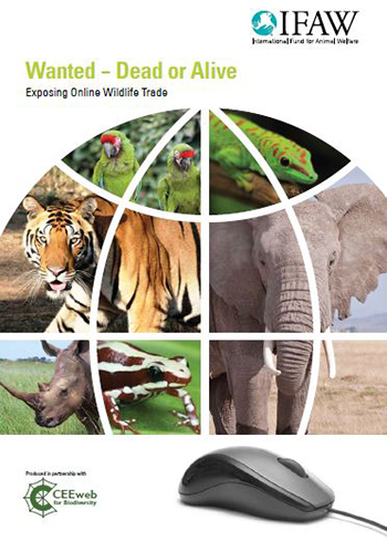 Today, IFAW releases the report Wanted – Dead or Alive; Exposing Online Wildlife Trade.
