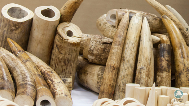If the bill passes, elephant ivory and other wildlife products will not be welcome in markets throughout Hawaii—both in physical storefronts and online.