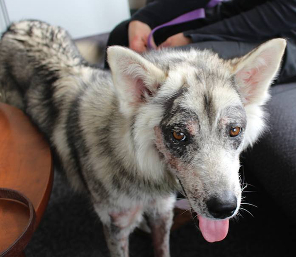 But IFAW's Northern Dogs Project Manager, Jan Hannah, nursed her back to health.