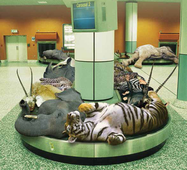 Delta, United and American airlines announced they would ban all shipments of lion, leopard, elephants, rhinoceros and buffalo trophies, effective immediately.