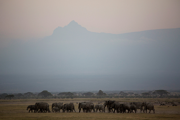 An elephant herd at the foot of Mt. Kilimanjaro.