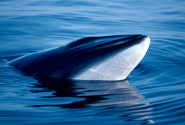The majority of countries on the IWC Scientific Committee have found that Japan's whaling is not for the purposes of science.
