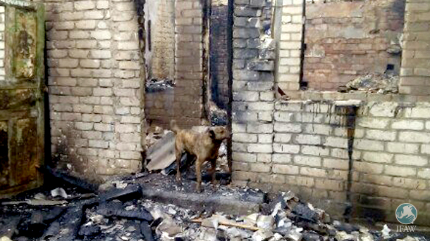 A fire destroyed the small clinic in the Gorlovka animal shelter. Medical supplies are all gone, and a dog died tragically.